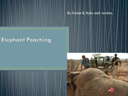 By Dylan B, Kyle and Jordan. Poaching is the wrong thing to do. It is wrong to kill elephants for their tusks and their meat. Poaching is illegal and.