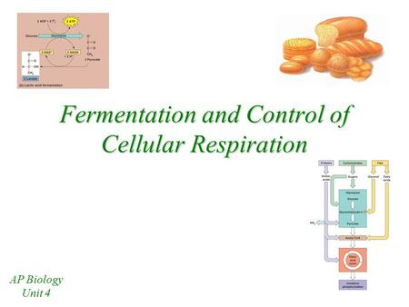 Fermentation and Control of Cellular Respiration AP Biology Unit 4.