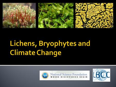  How are changes in distribution patterns of lichens and bryophytes over time correlated with man-made environmental changes?  How accurately can we.