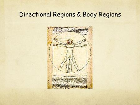 Directional Regions & Body Regions. I.Anatomical Position - standing erect, with face forward, arms at sides, & palms & toes directed forward.