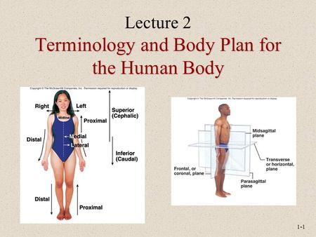 Lecture 2 Terminology and Body Plan for the Human Body