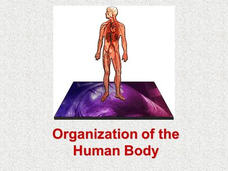 Organization of the Human Body. Objectives At the end of this unit you should be able to: –name the cavities of the body and their organs –locate and.