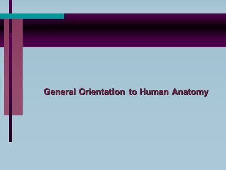 General Orientation to Human Anatomy. A. Anatomical position is a standing position in which the subject is erect, face forward, eyes ahead, arms down.