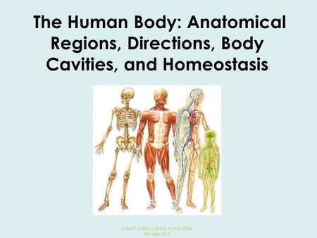 The Human Body: Anatomical Regions, Directions, Body Cavities, and Homeostasis Credit: Carlos J Bidot Author 2006 Revised 2010.