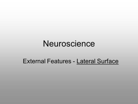 Neuroscience External Features - Lateral Surface.