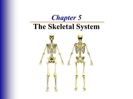 Chapter 5 The Skeletal System. The Skeletal System Parts of the skeletal system  Bones (skeleton)  Joints  Cartilages  Ligaments Divided into 2 divisions.