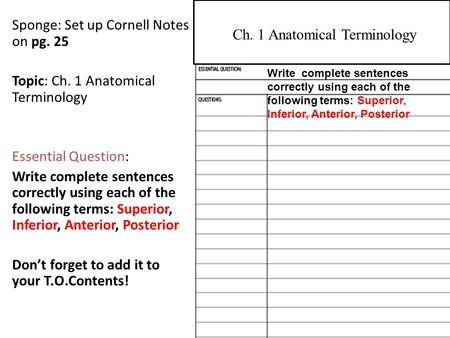 Sponge: Set up Cornell Notes on pg. 25 Topic: Ch. 1 Anatomical Terminology Essential Question: Write complete sentences correctly using each of the following.