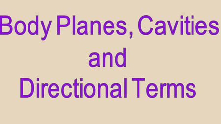 Body Planes, Cavities and Directional Terms