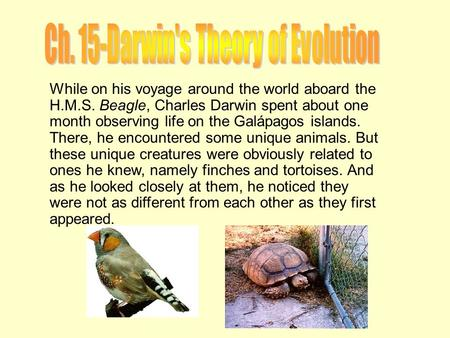 While on his voyage around the world aboard the H.M.S. Beagle, Charles Darwin spent about one month observing life on the Galápagos islands. There, he.