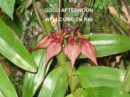 17 January 20061st Meeting, ICSU Regional Committee for Asia and the Pacific1 GOOD AFTERNOON WELLCOME TO RIO.
