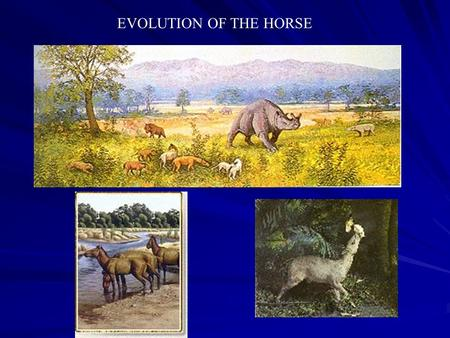 EVOLUTION OF THE HORSE. Eohippus 60 Million Years Ago EOCENE ERA Mesohippus 40 Million Years Ago Oligocene Era Miohippus 30 Million Years Ago Oligocene.