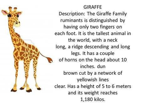 GIRAFFE Description: The Giraffe Family ruminants is distinguished by having only two fingers on each foot. It is the tallest animal in the world, with.