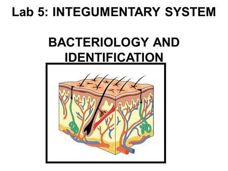 Lab 5: INTEGUMENTARY SYSTEM BACTERIOLOGY AND IDENTIFICATION.