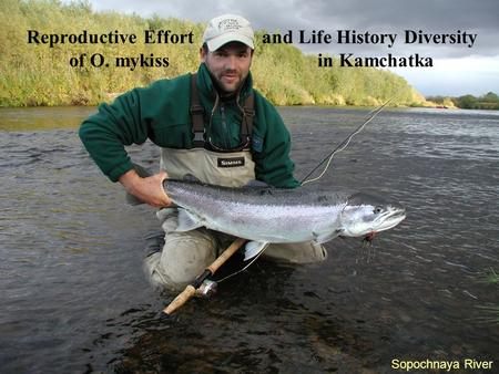 Sopochnaya River Reproductive Effort and Life History Diversity of O. mykiss in Kamchatka.
