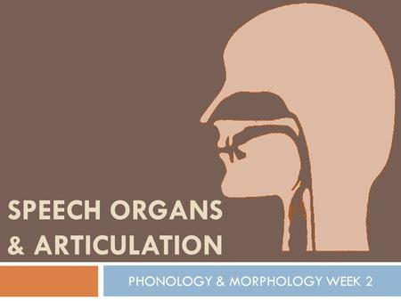 SPEECH ORGANS & ARTICULATION PHONOLOGY & MORPHOLOGY WEEK 2.