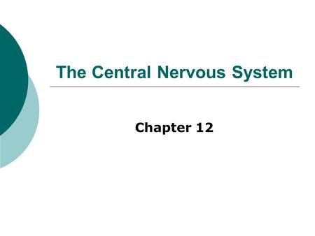 The Central Nervous System Chapter 12. Embryonic Development.