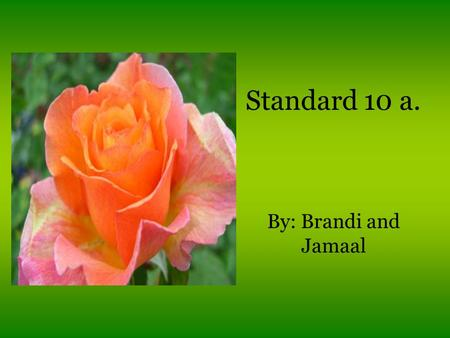 Standard 10 a. By: Brandi and Jamaal. All About Plants Plants are multicellular eukaryotes that have cell walls made of cellulose. Plants are in the Kingdom.