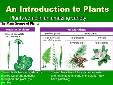 An Introduction to Plants Plants come in an amazing variety. These plants have no system for moving water and nutrients throughout the plant. (no plumbing)