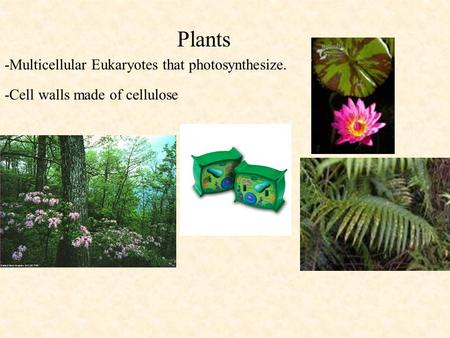 Plants -Multicellular Eukaryotes that photosynthesize. -Cell walls made of cellulose.