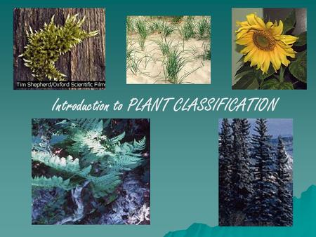 Introduction to PLANT CLASSIFICATION. Bellwork  Roots, leaves, and stems are very important parts of a plant. Pick one of those three parts, and describe.