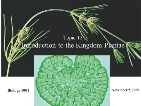 Topic 13 Introduction to the Kingdom Plantae Biology 1001 November 2, 2005.