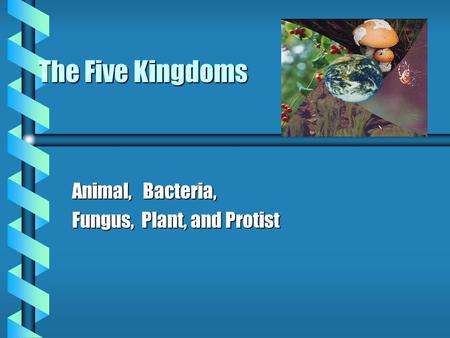 The Five Kingdoms Animal, Bacteria, Fungus, Plant, and Protist.