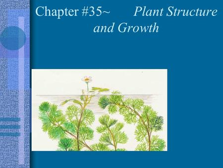 Chapter #35~ Plant Structure and Growth