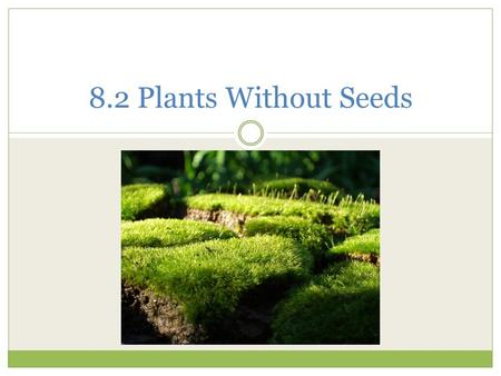 8.2 Plants Without Seeds. Nonvascular Plants Do not grow tall  Do not have roots, stems or leaves Live in moist areas  Absorb water directly from environment.