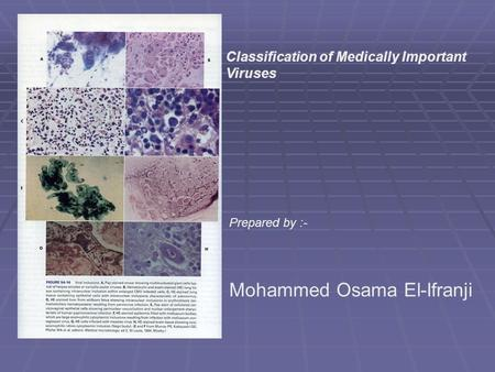 Prepared by :- Mohammed Osama El-Ifranji Classification of Medically Important Viruses.