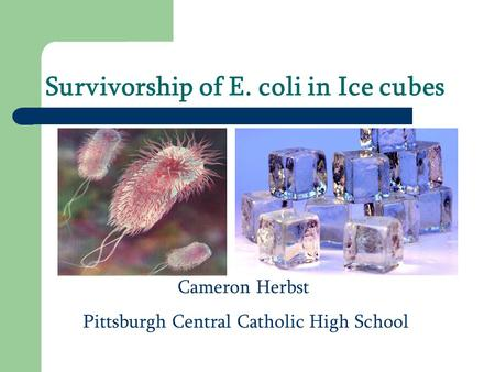 Survivorship of E. coli in Ice cubes Cameron Herbst Pittsburgh Central Catholic High School.