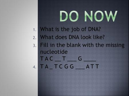 Do Now What is the job of DNA? What does DNA look like?
