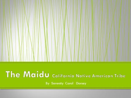 By Serenity Carol Dorsey. The Maidu is a California Native American tribe. The Maidu lived in the hills and mountains. They also lived in Sacramento valley.