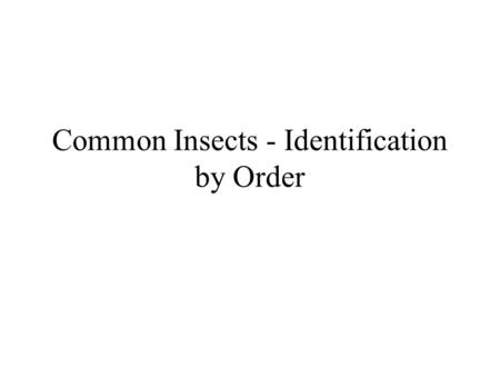 Common Insects - Identification by Order. Order - Anoplura Simple Sucking Only Hog Louse Can attack deer, moose, elk, wild hogs.
