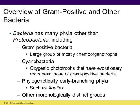 Overview of Gram-Positive and Other Bacteria