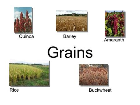 Quinoa Barley Amaranth Grains Rice Buckwheat.