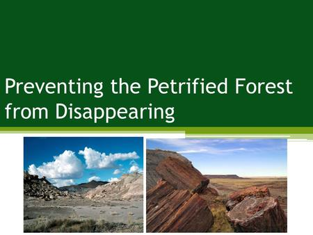 Preventing the Petrified Forest from Disappearing.