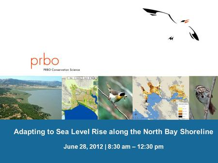 PRBO Conservation Science Adapting to Sea Level Rise along the North Bay Shoreline June 28, 2012 | 8:30 am – 12:30 pm.