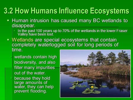 3.2 How Humans Influence Ecosystems  Human intrusion has caused many BC wetlands to disappear.  In the past 100 years up to 70% of the wetlands in the.