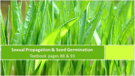 Sexual Propagation & Seed Germination