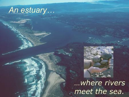 An estuary… …where rivers meet the sea. Estuaries in Oregon River dominated Bar-built Drowned river mouth Blind.