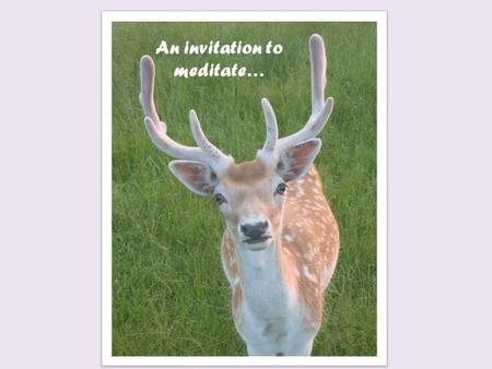 An invitation to meditate…. Types of Meditation Concentration Meditation Focuses of peace and stillness of the mind. Mindfulness Meditation Emphasizes.