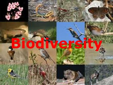 "Biodiversity. What is Biodiversity The word biodiversity comes from the term "" biological diversity"". This diversity is the astounding array of plants."