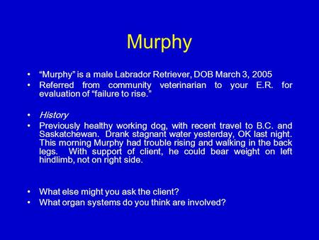 "Murphy ""Murphy"" is a male Labrador Retriever, DOB March 3, 2005 Referred from community veterinarian to your E.R. for evaluation of ""failure to rise."""