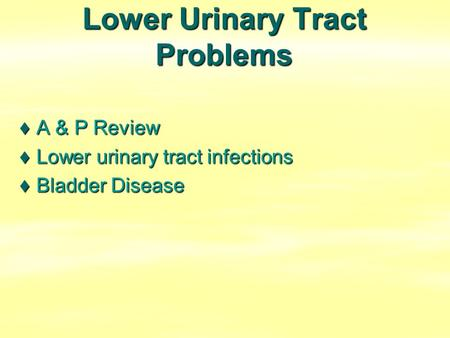 Lower Urinary Tract Problems ♦A & P Review ♦Lower urinary tract infections ♦Bladder Disease.