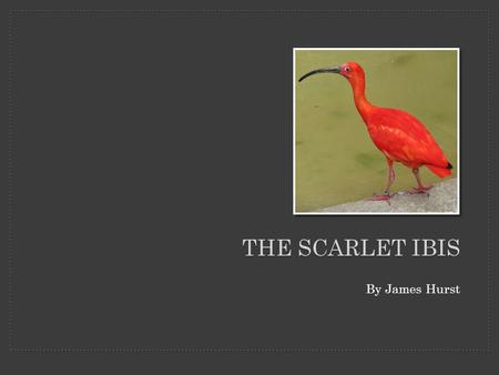 thesis sentence for the scarlet ibis 'the scarlet ibis' is a short story published in 1960 by hits the reader with a wave of death symbolism starting at sentence one and ending with the final line of.
