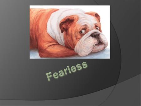 Fearless  Fearless is scared of everything like backfires in the streets from cars.  He is scared of a handbag.