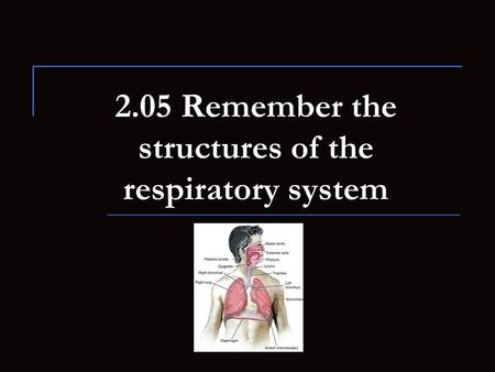 2.05 Remember the structures of the respiratory system.