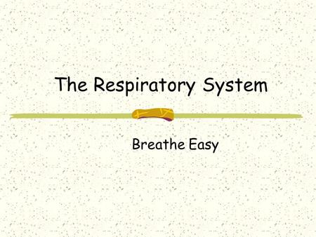 The Respiratory System Breathe Easy. Respiratory System Consists of the lungs and air passages. Includes the nose, pharynx, trachea, bronchi, alveoli,