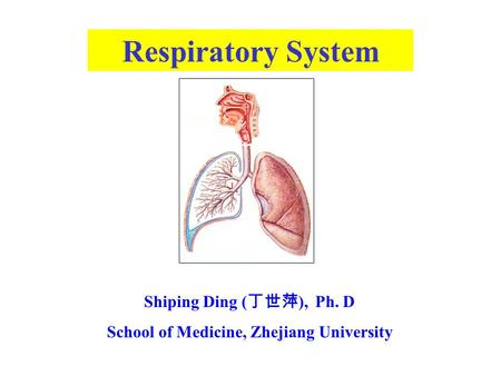 Respiratory System Shiping Ding ( 丁世萍 ), Ph. D School of Medicine, Zhejiang University.