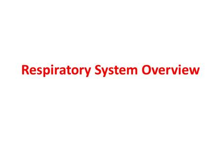 Respiratory System Overview. Nasal Cavity Warms and moistens air so that it doesn't damage the respiratory tract. Dust and debris is also removed by short.